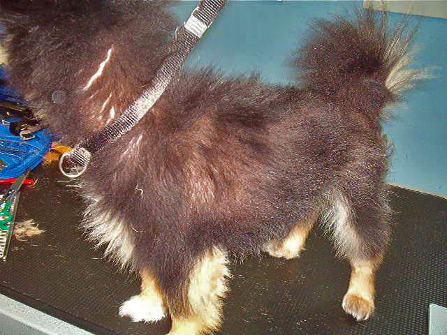 Clipper Alopecia Atomic Canine